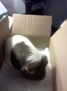 She's in a box.  She likes to hang out in boxes.  Don't ask.